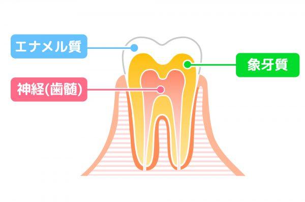 馬車道アイランドタワー歯科 ブログ 大人むし歯の危険ゾーン 象牙質
